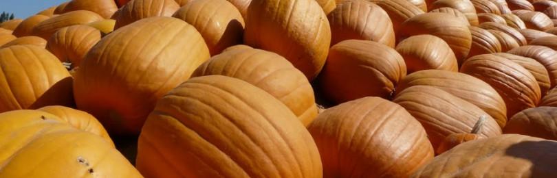 Ярмарка тыкв на Хэллоуин: репортаж Иры Чирашни из Калифорнии