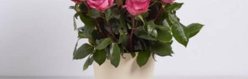 Доставка цветов в Харькове