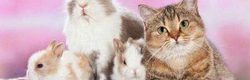 Домашние животные — советы и консультации