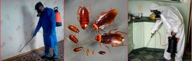 Как рассчитывается цена на уничтожение тараканов
