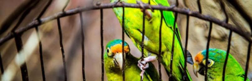 Вы любитель домашних питомцев? Товары для попугая или грызуна, корм