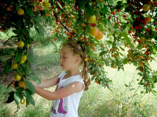 Сербские фрукты