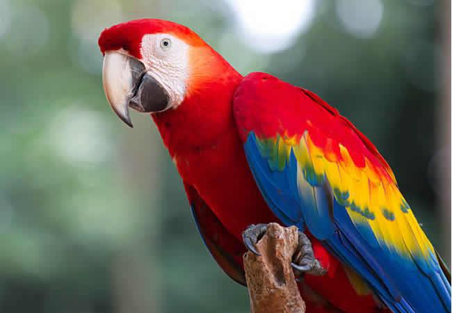 Покупка попугая: как правильно выбрать птицу и стоит ли экономить