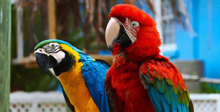 Сколько стоит попугай?